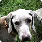 Adopt A Pet :: Sparty