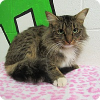 Adopt A Pet :: 16C-1515 (12/3) - Rome, GA