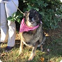 Adopt A Pet :: Maxine - Nashua, NH