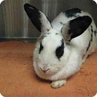 Adopt A Pet :: *BURT - Norco, CA