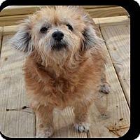 Adopt A Pet :: Sandra - ADOPTION PENDING!! - Arlington, VA