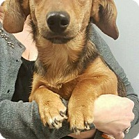 Adopt A Pet :: Rosie Rae - New Oxford, PA