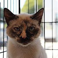 Adopt A Pet :: Adriana - Santa Monica, CA