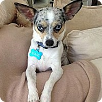 Adopt A Pet :: Dani - Statewide and National, TX
