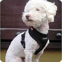 Adopt A Pet :: Tipper - La Costa, CA