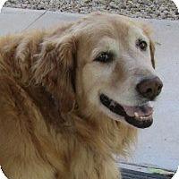 Adopt A Pet :: Sierra - Scottsdale, AZ