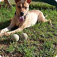 Adopt A Pet :: LEIA - Torrance, CA