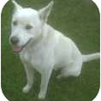 Adopt A Pet :: Parker - Lake Forest, CA
