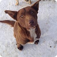 Adopt A Pet :: Jersey - Saskatoon, SK