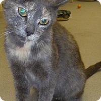 Adopt A Pet :: Abby - Hamburg, NY