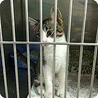 Adopt A Pet :: Spartan - Byron Center, MI