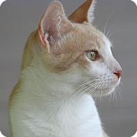 Adopt A Pet :: Cadby - North Fort Myers, FL