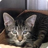 Adopt A Pet :: Craizen - East Brunswick, NJ