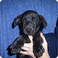 Adopt A Pet :: Doja - Oviedo, FL