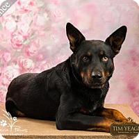 Adopt A Pet :: Chance *Fully Sponsored* - Ottawa, KS