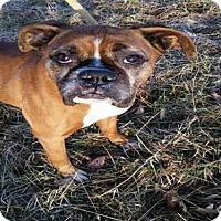 Adopt A Pet :: Frazier - Alexandria, VA