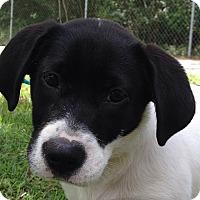 Adopt A Pet :: Bonnie - SOUTHINGTON, CT