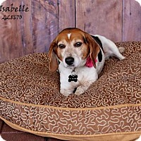 Adopt A Pet :: ISABELLE - Conroe, TX