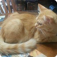 Adopt A Pet :: Timmy - Marietta, GA