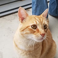 Adopt A Pet :: Buddy - Columbus, OH