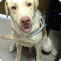 Adopt A Pet :: Denver - Troy, OH