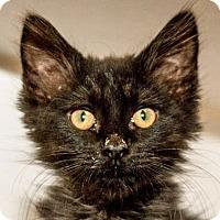 Adopt A Pet :: Goofy - Prescott, AZ