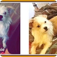 Adopt A Pet :: DIXIE - Malvern, AR