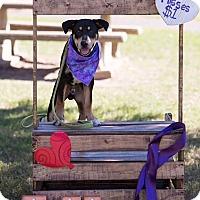 Adopt A Pet :: Rocky - DeForest, WI