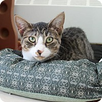 Adopt A Pet :: Guitar 32160017 - Westampton, NJ