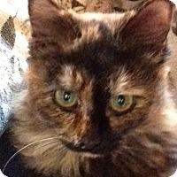 Adopt A Pet :: Tess - Eureka, CA