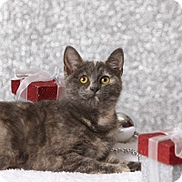 Adopt A Pet :: Trickster - Harrisonburg, VA