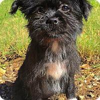 Adopt A Pet :: JULIA - Jacksonville, FL