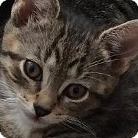Adopt A Pet :: Magic - New York, NY