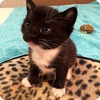 Adopt A Pet :: Jujube 27 - Austin, TX