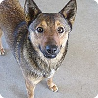 Adopt A Pet :: Chloe - Stilwell, OK
