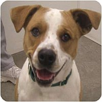 Adopt A Pet :: Daffny - Phoenix, AZ