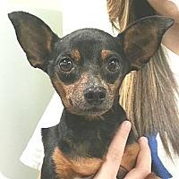 Adopt A Pet :: Roxy - geneva, FL