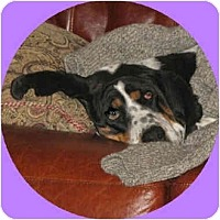 Adopt A Pet :: Daisy Mae - Scottsdale, AZ