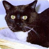 Adopt A Pet :: Adam - Medway, MA