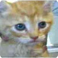 Adopt A Pet :: JoJo - Arlington, VA