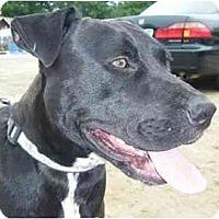 Adopt A Pet :: Stan The Man - Raymond, NH
