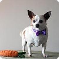 Adopt A Pet :: Thumper - South Amboy, NJ