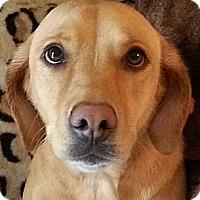 Adopt A Pet :: Nora - Orlando, FL