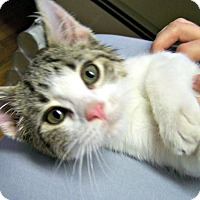 Adopt A Pet :: Porthos - Toledo, OH