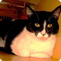 Adopt A Pet :: Laverne - Colmar, PA