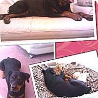 Adopt A Pet :: Katie - Gilbert, AZ