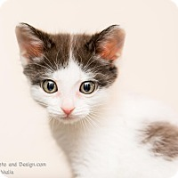 Adopt A Pet :: Hope - Fountain Hills, AZ
