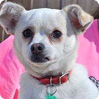 Adopt A Pet :: Jack Ethan - Gadsden, AL