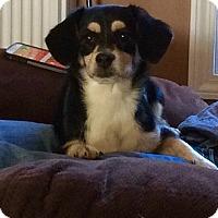 Adopt A Pet :: Sierra - Alpharetta, GA