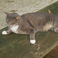 Adopt A Pet :: Treckie - Bonita Springs, FL